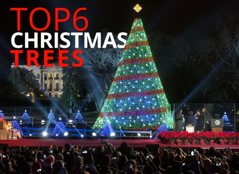 Top 6… Christmas trees by The Best You