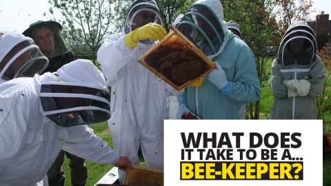 What does it take to be a… beekeeper by Tim Lovett