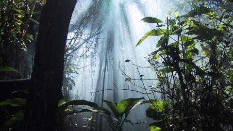 Jungle Shirley – Shirley Thompson