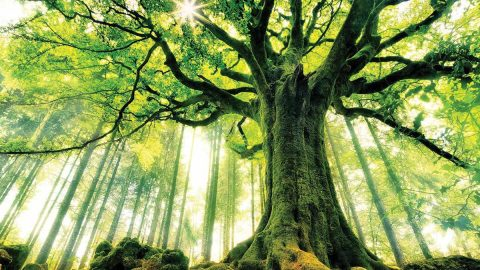 TreeSisters