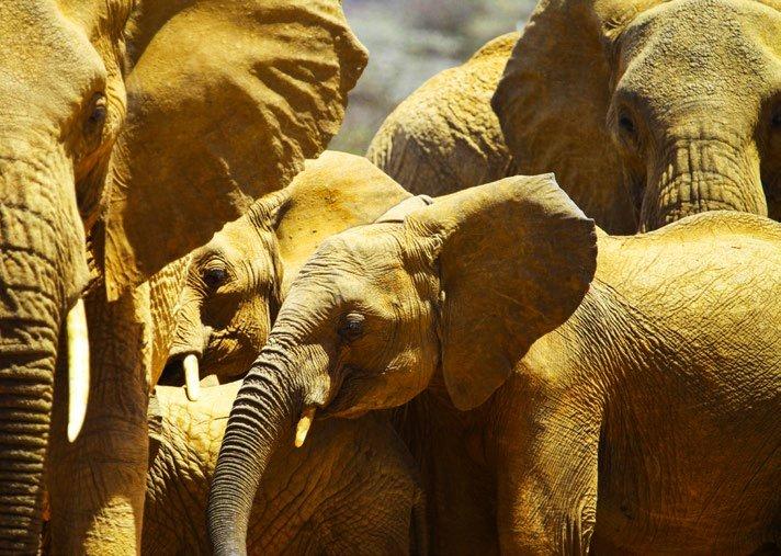 The Great Elephant Walk