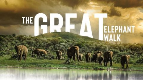 The Great Elephant Walk